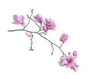 Rama de la flor Fotografía de archivo