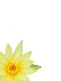 Rama de la flor de la orquídea Imágenes de archivo libres de regalías