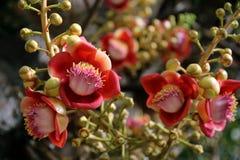 Rama de la flor y del brote del obús Imágenes de archivo libres de regalías