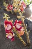 Rama de la flor y del brote del obús Imagenes de archivo