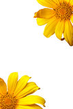 Rama de la floración de la flor de la orquídea fotografía de archivo libre de regalías
