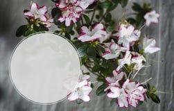 Rama de la floración de la primavera con las flores rosadas Forma gráfica del círculo de la insignia Foto de archivo libre de regalías