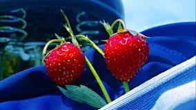 Rama de la fresa Fotografía de archivo