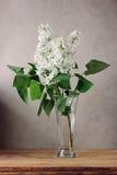 Rama de la lila blanca en el florero de cristal Imágenes de archivo libres de regalías