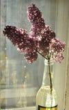 Rama de la lila en la botella Fotos de archivo libres de regalías