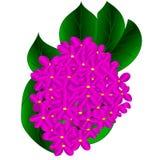 Rama de la lila floreciente Fotos de archivo