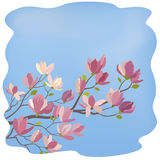 Rama de la magnolia con las flores y las hojas Fotos de archivo