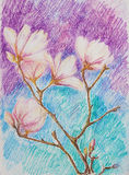 Rama de la magnolia floreciente rosada Imágenes de archivo libres de regalías