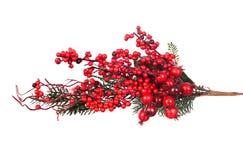 Rama de la Navidad con las frutas rojas Fotos de archivo