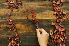 Rama de la Navidad con las frutas rojas Fotos de archivo libres de regalías
