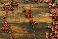 Rama de la Navidad con las frutas rojas Imagen de archivo