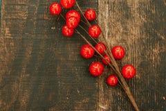 Rama de la Navidad con las frutas rojas Imagenes de archivo