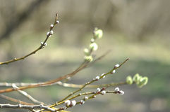 Rama de la primavera, símbolo de pascua imagenes de archivo