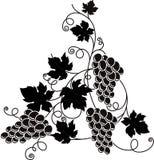Rama de la uva con el manojo de uvas y de hojas Imagenes de archivo