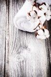 Rama de las cápsulas maduras del algodón Imagenes de archivo