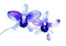 Rama de las orquídeas azules de la acuarela Foto de archivo