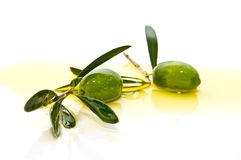 Rama de olivo con las aceitunas Imagen de archivo libre de regalías