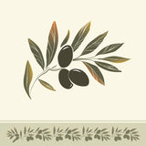 Rama de olivo decorativa. Para la etiqueta, paquete. Imagenes de archivo