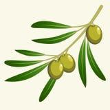Rama de olivo del vector Fotos de archivo