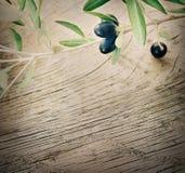 Rama de olivo en fondo de madera Imágenes de archivo libres de regalías