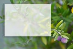 Rama de olivo en un fondo borroso Maqueta transparente para el contenido Copie el espacio Profundidad del campo baja fotografía de archivo