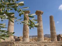 Rama de olivo y columna griega Imagen de archivo libre de regalías