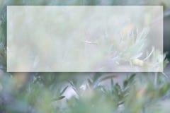 Rama de olivo y fondo borroso Maqueta transparente para el contenido Copie el espacio Imagen entonada fotos de archivo libres de regalías