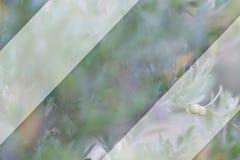 Rama de olivo y fondo borroso Maqueta transparente para el contenido Copie el espacio Imagen entonada fotos de archivo