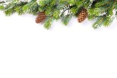 Rama de árbol de navidad con los conos de la nieve y del pino Foto de archivo libre de regalías