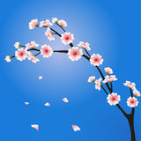 Rama de Sakura del vector Imágenes de archivo libres de regalías