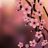 Rama de Sakura - vector realista Fotografía de archivo