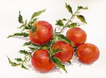 Rama de tomates imágenes de archivo libres de regalías