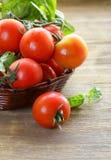 Rama de tomates orgánicos frescos con albahaca verde Imágenes de archivo libres de regalías