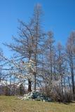 Rama de un árbol fotos de archivo