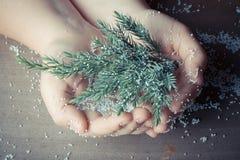 Rama de un árbol de navidad en mano humana con los pedazos de pla de la espuma Foto de archivo