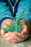 Rama de un árbol de navidad en mano humana con los pedazos de pla de la espuma Fotos de archivo libres de regalías