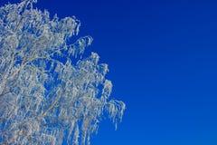 Rama de un árbol en una escarcha contra un cielo azul Imagen de archivo