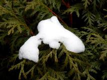 Rama de un árbol de navidad en el cierre de la nieve para arriba Imágenes de archivo libres de regalías