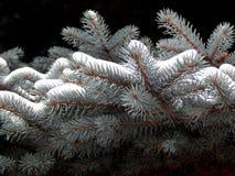 Rama de un árbol de navidad en el cierre de la nieve para arriba Fotografía de archivo