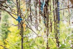 Rama de un árbol por completo de rosarios fotografía de archivo