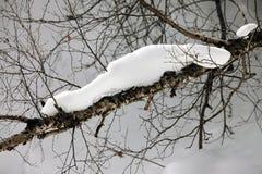 Rama de un abedul en nieve Imagen de archivo libre de regalías