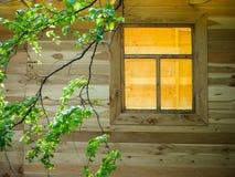Rama de un abedul en un fondo de la ventana Imágenes de archivo libres de regalías