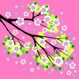 Rama de un ejemplo floreciente del vector del manzano Fotos de archivo