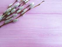 Rama de un palillo de madera de la decoración del día de fiesta de la marcha del rosa del sauce, suave Imágenes de archivo libres de regalías
