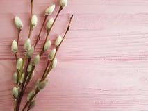 Rama de un palillo de madera de la decoración del día de fiesta de la naturaleza del rosa del sauce, suave Fotos de archivo libres de regalías