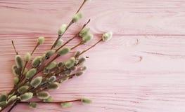 Rama de un palillo de madera de la decoración del día de fiesta del saludo del rosa del sauce, suave Fotografía de archivo libre de regalías