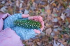 Rama de un piel-árbol cubierto por la escarcha en las manos del niño Imagenes de archivo