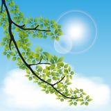 Rama del árbol ilustración del vector