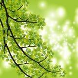 Rama del árbol libre illustration