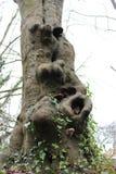 Rama del árbol Fotografía de archivo libre de regalías